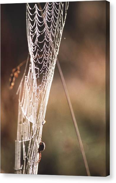 Spider's Web Canvas Print by Alan Sirulnikoff