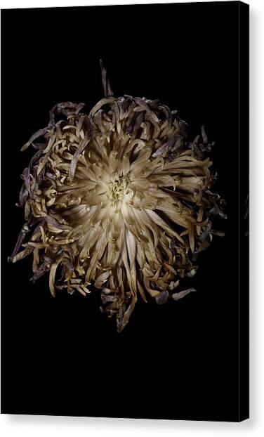 Spiky Flower Canvas Print by Nathaniel Kolby