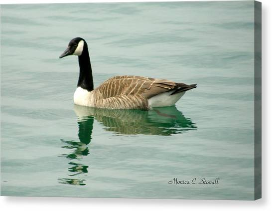 Spring Collection - Goose In Bay Harbor Canvas Print