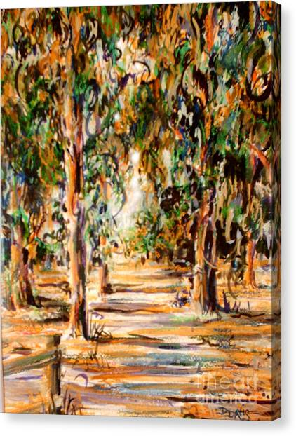 Stanford Eucalyptus Grove Canvas Print