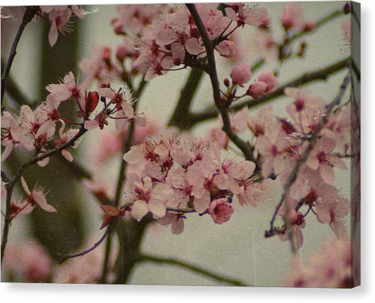 Sweet Spring Canvas Print by Terrie Taylor