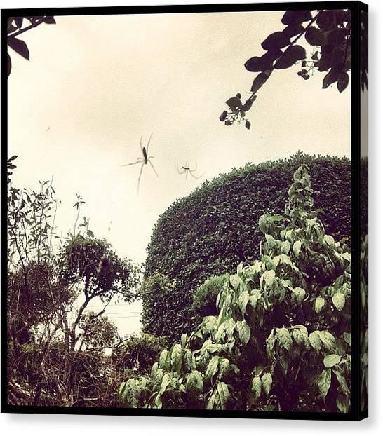 Spider Web Canvas Print - Tea House by Logan Mcpherson