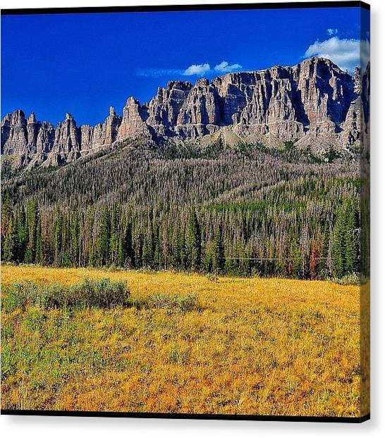 Tetons Canvas Print - The Destructiveness Of The Pine Bark by Chris Bechard