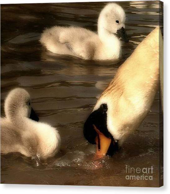 Birds Canvas Print - The Lesson by Abbie Shores