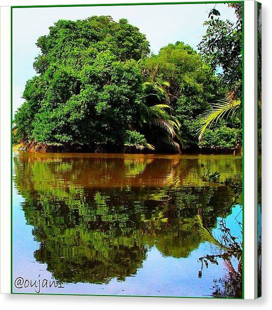 Jungles Canvas Print - The Reflection On The Calm Waters Of by Ahmed Oujan