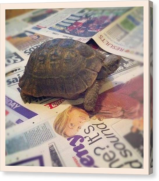 Tortoises Canvas Print - Tiny #the #tortoise by Megan Shuttlewood