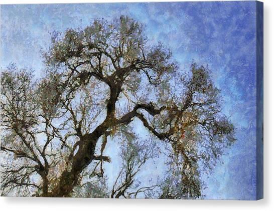 Tree Canvas Print by Algimantas Gavenauskas