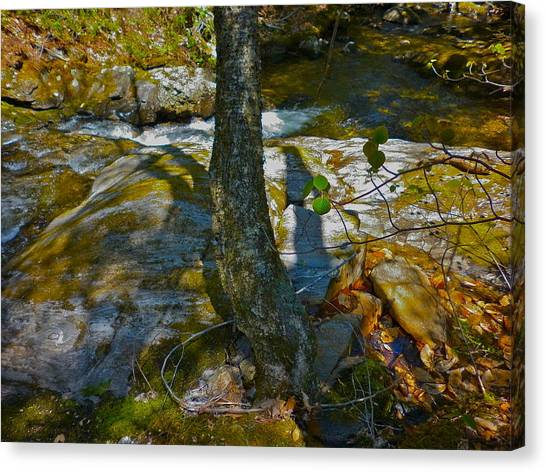 Tree And 3 Shadows Canvas Print by George Ramos