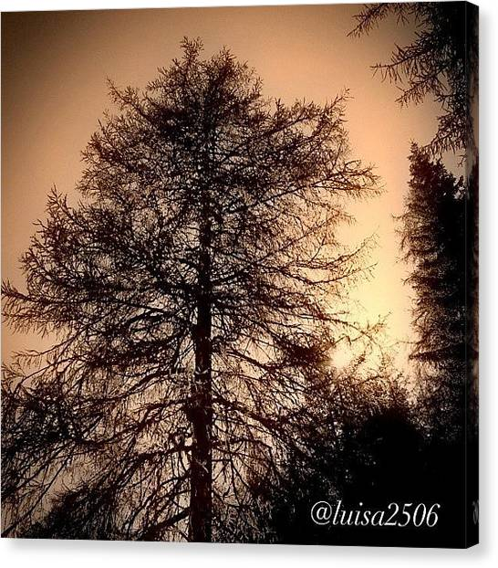 Woods Canvas Print - Tree by Luisa Azzolini