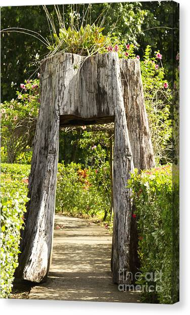 Tree Tunnel Canvas Print by Blink Images