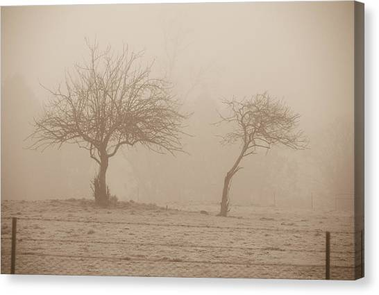 Trees In Fog Canvas Print