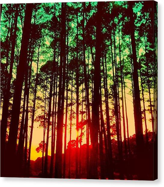 Rainbows Canvas Print - Trees by Katie Williams