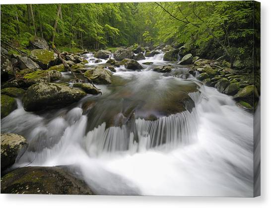 Tremont Spring In Great Smoky Mountains Canvas Print by Darrell Young