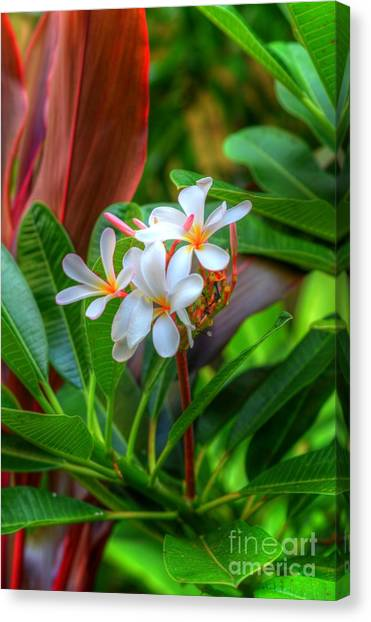 Tropical  Canvas Print by Kelly Wade