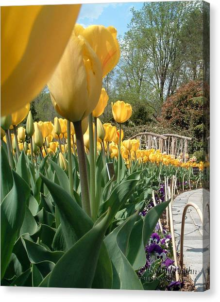 Tulips On Parade Canvas Print