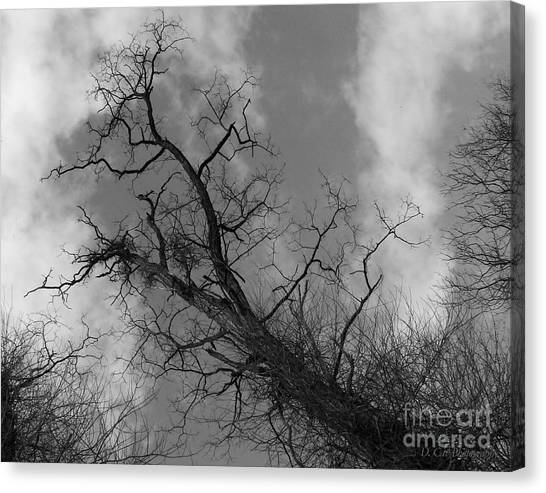 Up Tree Canvas Print