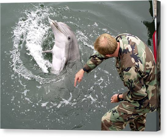 Bottlenose Dolphins Canvas Print - Us Navy Bottlenose Dolphin by Us Navy