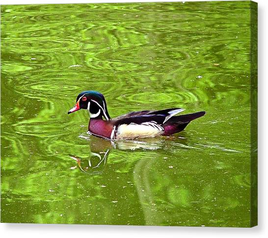 Water Wood Duck Canvas Print