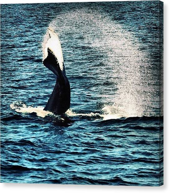 Whales Canvas Print - Whale Watching by Kerry Fitzsimmons