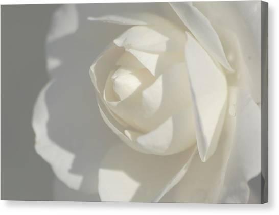 White Canvas Print by Meeli Sonn