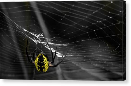 Wicked Web Canvas Print by Brian Stevens
