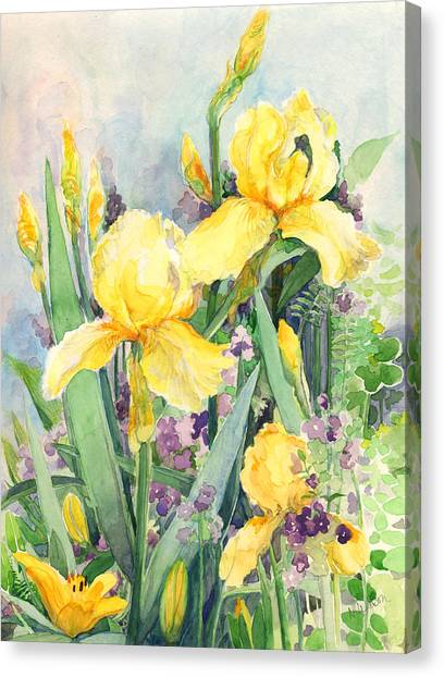 Yellow Iris Canvas Print