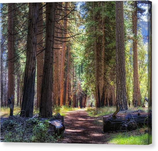 Yosemite Trail Canvas Print by Stephen Campbell