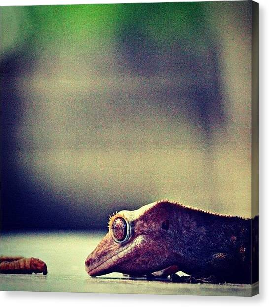 Lizards Canvas Print - Facebook.com/karamichellephotography by Kara Woodson