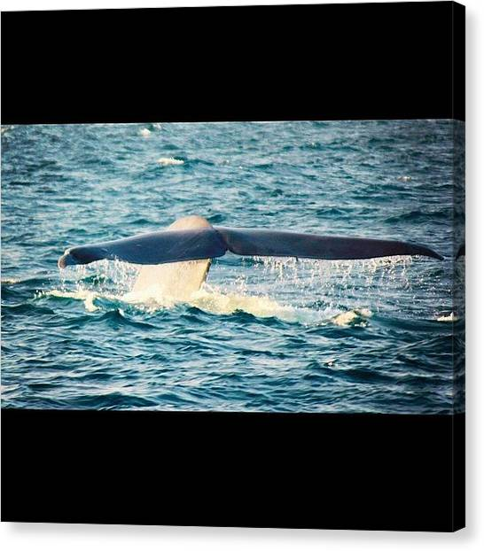 Whales Canvas Print - #instagram #instagramers #all_shots by Mark Jackson