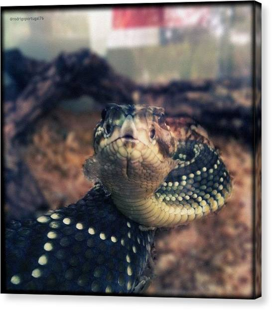 Reptiles Canvas Print - #iphoneonly #igersbrasil #instagood by Rodrigo Portugal