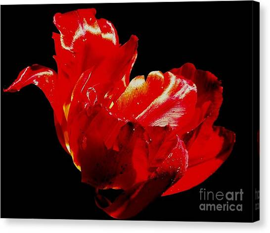 Tulipe Canvas Print by Sylvie Leandre