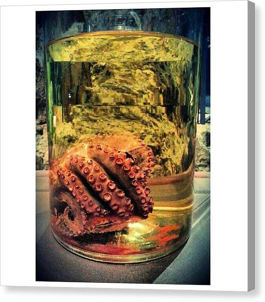 Octopus Canvas Print - Instagram Photo by Clifford McClure