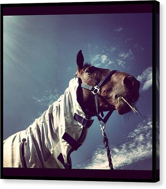 Thoroughbreds Canvas Print - Instagram Photo by Caitlin Hay