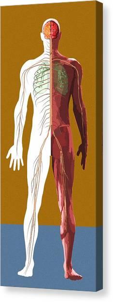 Human Anatomy, Artwork Canvas Print by Mehau Kulyk