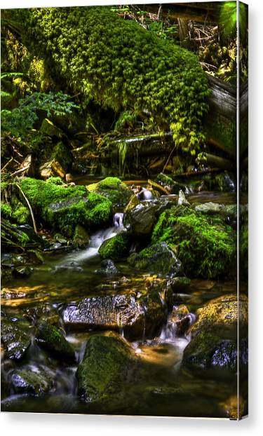 Lost Girl Creek Canvas Print by Grover Woessner
