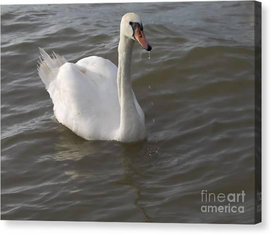 Swan Canvas Print by Odon Czintos