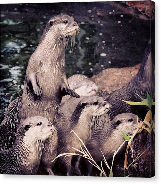 Otters Canvas Print - Instagram Photo by Markus Kantonen