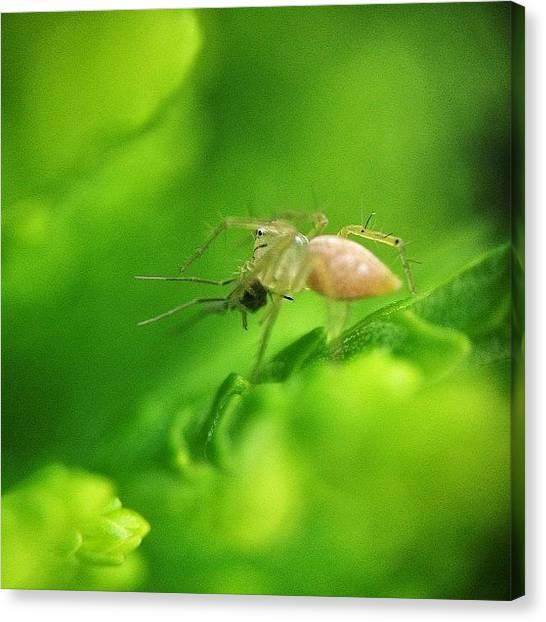 Meals Canvas Print - #nature #naturelover #macro #macrolens by Sooonism Heng