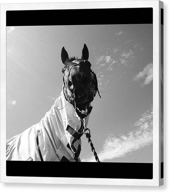 Thoroughbreds Canvas Print - #gelding #friends #lifeinthesaddle by Caitlin Hay
