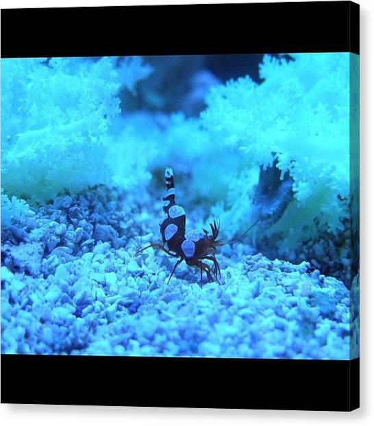 Aquariums Canvas Print - Instagram Photo by Harold Coombs III