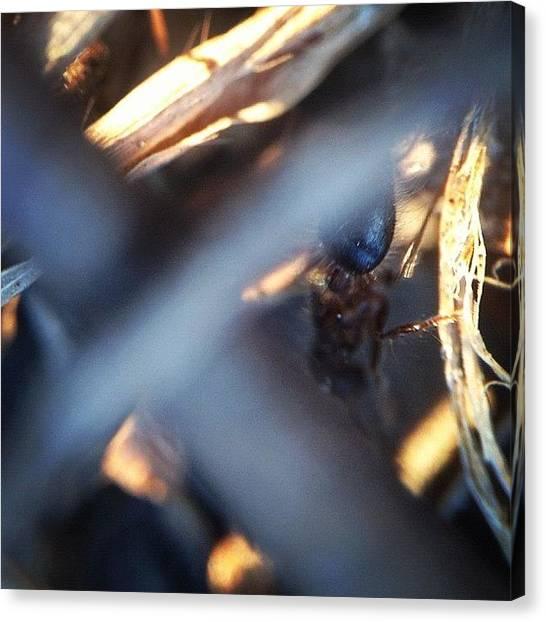 Ants Canvas Print - #macro #macroworld #macrogardener by Sooonism Heng