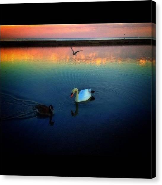 Swans Canvas Print -  by Elena Gomez