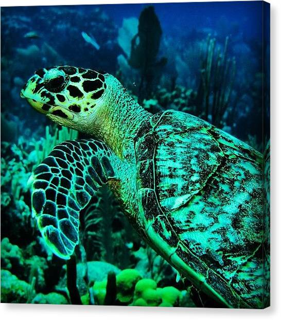 Sea Turtles Canvas Print - Instagram Photo by Arturo Brook