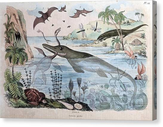 Maastricht Canvas Print - 1834 Guerin Engraving 'extinct Animals by Paul D Stewart