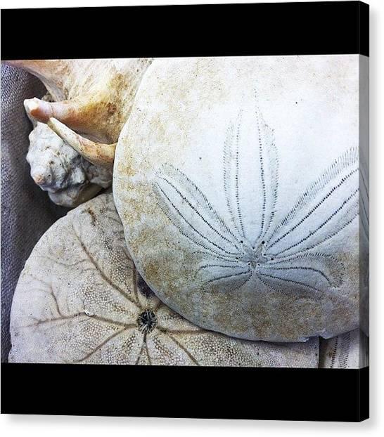 Seashells Canvas Print - 186/365 - My Favorite Things Series by Julia Reyes