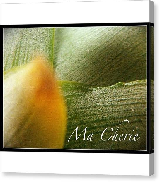 Lilies Canvas Print - #instadaily #iphonesia #iphoneography by Sherri Galvan