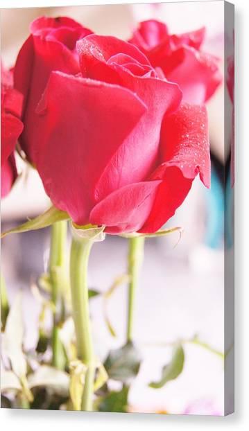 Rose Canvas Print by Gornganogphatchara Kalapun