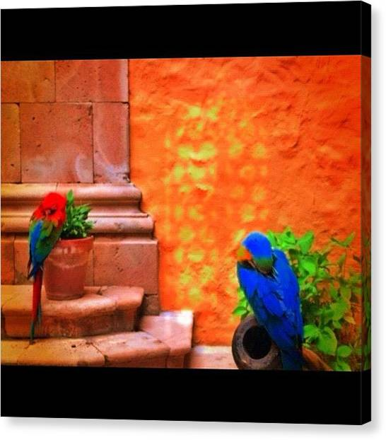 Parrots Canvas Print -  by Eda Ozguler