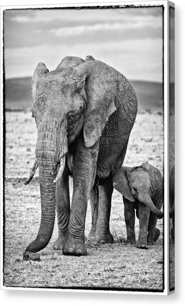 Canvas Print featuring the photograph African Elephants In The Masai Mara by Perla Copernik