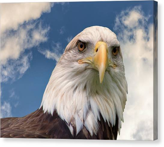 American Bald Eagle Canvas Print by Ken Wolter